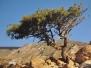 A fák csodavilága