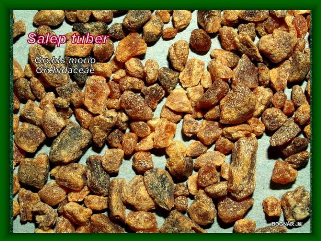 Agárkosbor drog-2 Salep tuber