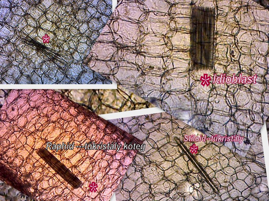 Aloe-levél kristályok