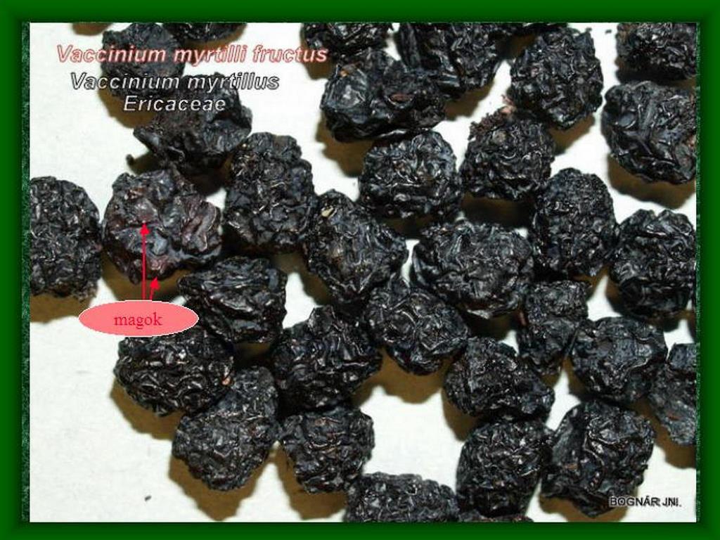Fekete-áfonya-termés drog