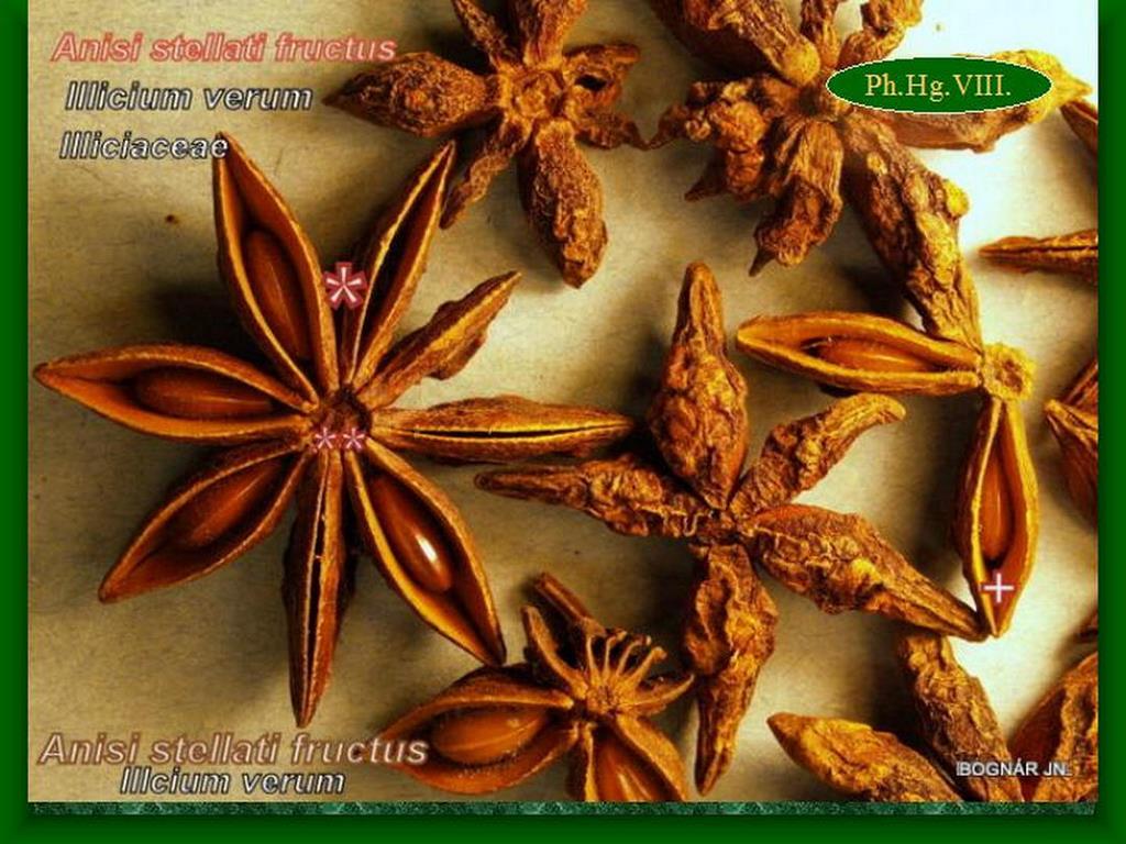 Kínai csillagánizs termésdrog