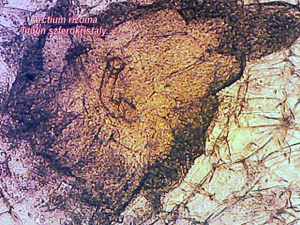 Közönséges bojtorján-inulin szferokristly a drogban