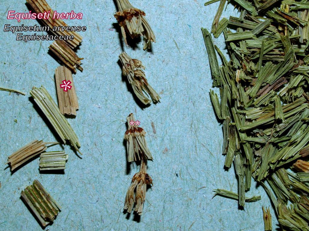 Mezei zsurló - drog2