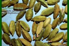 Zöld kardamom - Cardami fructus