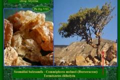 Szomáliai balzsamfa