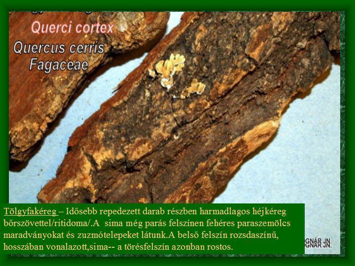 Tölgyfa - kéregdrog