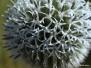 Növények közelről