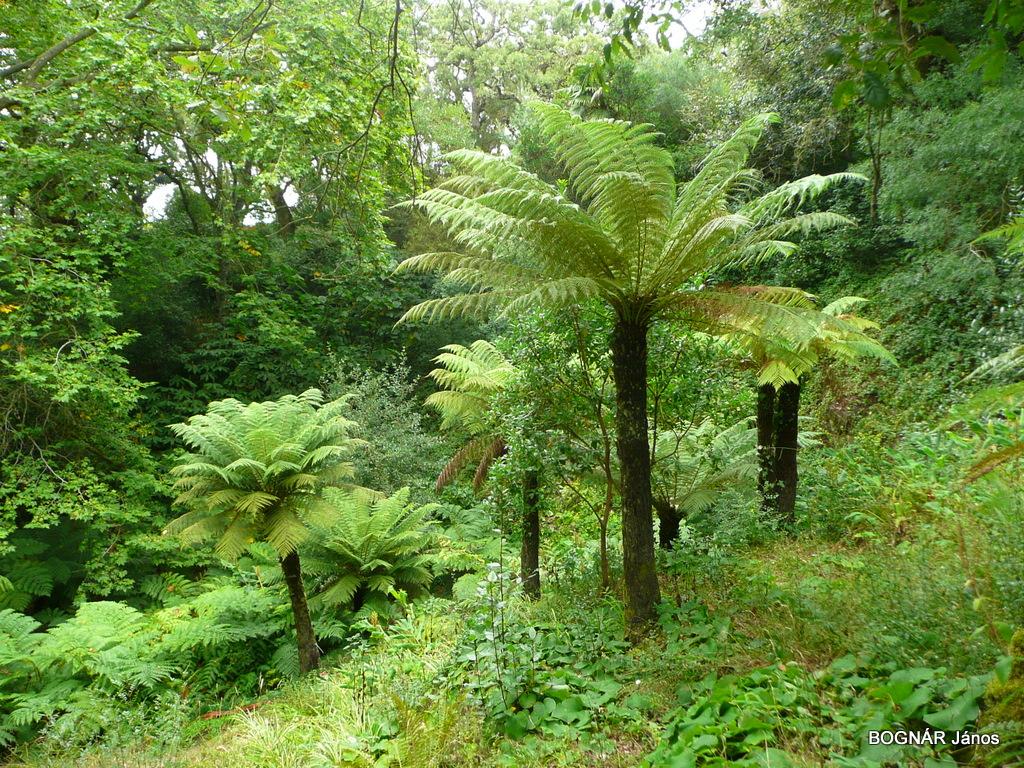 4 Páfrányfák egy botanikus kjertben